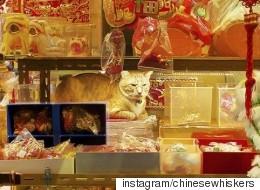 홍콩의 가게들에는 이런 고양이들이 살고 있다