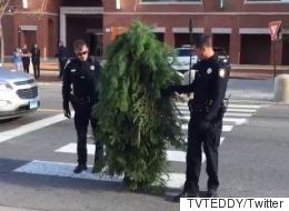 Dude Dressed Up As Tree Gets Arrested