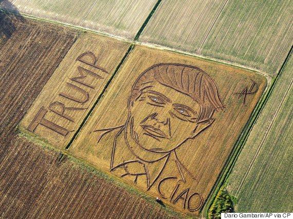 trump corn field dario gambarin