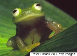 Les populations d'espèces réduites de 67% d'ici 2020 à cause de l'humain