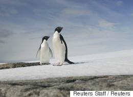 Un immense sanctuaire marin créé en Antarctique