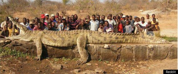 Largest Crocodile Ever Killed Giant reddit crocodile