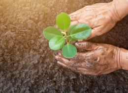 The offMetro Guide to Giving Back to the Environment