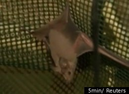 WATCH: Israeli Army Ghost Bunkers Reborn As Bat House