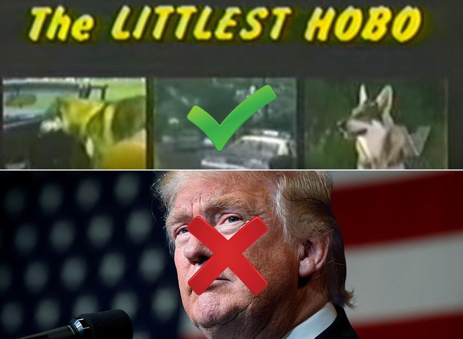 trump littlest hobo