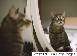 Quand un chat danse avec son reflet dans le miroir