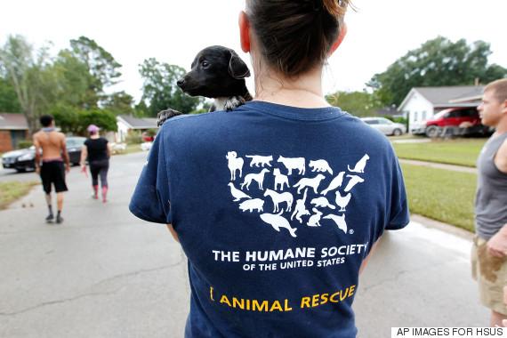 humane society usa