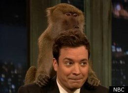 Jimmy Fallon Baboon
