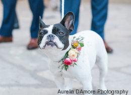 Ces 22 chiens avaient fière allure au mariage de leurs maîtres