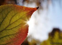 Por qué noviembre no es un mes tan marrón: las citas más 'verdes' del calendario