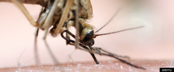 Malaria Bigger Problem Than Thought