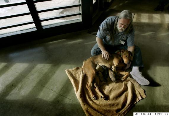 inmate petting dog
