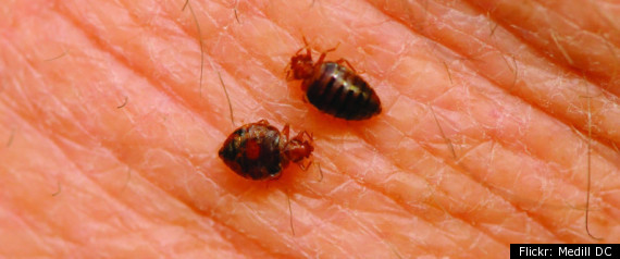 University Of Nebraska Bedbug Cover Up