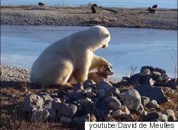 개를 만난 북극곰은 개가 귀여웠다(동영상)