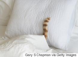Voici le chat le plus sournois du monde