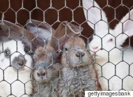내년 2월부터 '동물실험' 화장품 팔면 안 된다