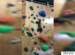Fearless Rescue Cat Scales Rock Climbing Wall Like A Boss