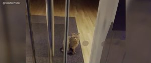 CAT BURGLAR TRAPPED IN BANK