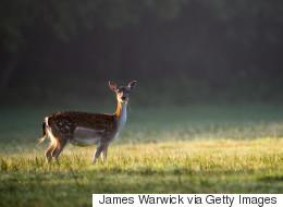 Un jeune cerf croise un chasseur en forêt... et ne le quitte plus