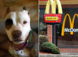 McDonald's: Pit Bull-McBites Risk Comparison Not Meant To Be Offensive