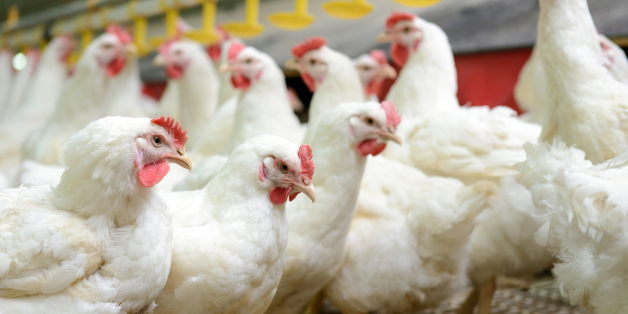 United Kingdom will not accept chlorinated chicken to secure U.S. trade deal