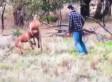 Känguru nimmt Hund in Schwitzkasten - dann springt der Besitzer aus dem Auto - Video