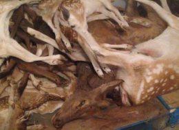 Un nombre élevé d'animaux seraient maltraités et décédés au Marineland Ontario