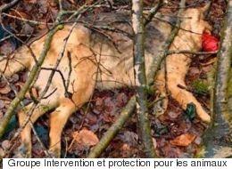 Des cas de cruauté animale préoccupants dans les Laurentides