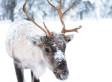 Deux nouvelles espèces en voie d'extinction au Canada