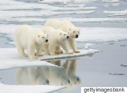 '북극곰의 눈물' 속 정준하가 읽던 책을 읽어봤다