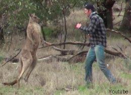 La verdadera historia tras el vídeo del hombre que boxea con un canguro
