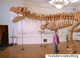 거대하지만 위협적이지는 않은 공룡이 등장했다
