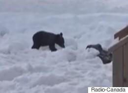 Une famille fait ses adieux au petit ourson qu'elle avait adopté