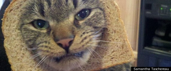 Cat Breading Meme Infuriating Cats Everywhere (PHOTOS)