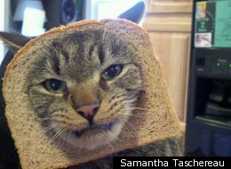 Cats Have Had Enough Of 'Cat Breading'