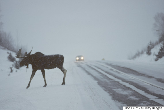 moose winter car