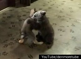 Baby Bear And Wolf Play As Friends