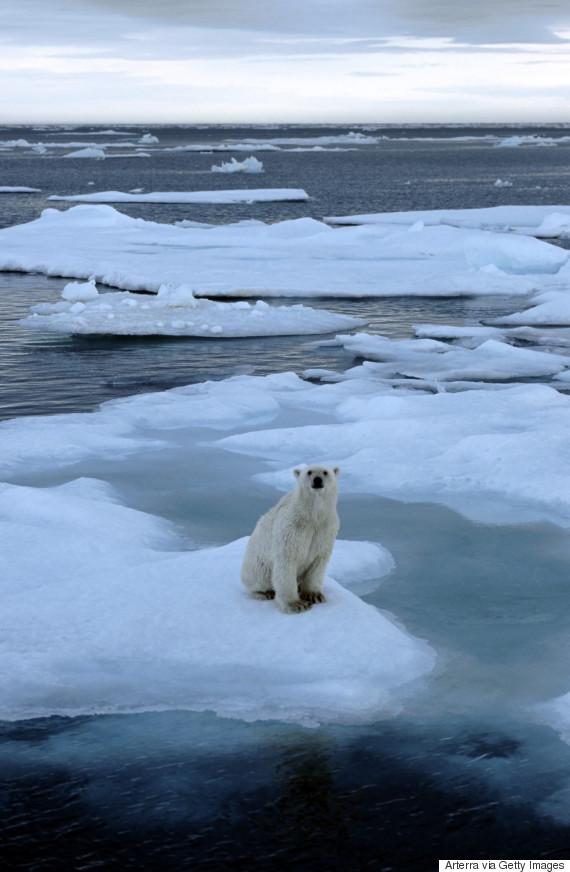 polar bear pole