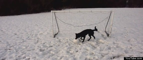 Dog Goalkeeper