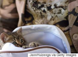 Une Canadienne cache un chat dans sa sacoche jusqu'en Nouvelle-Zélande