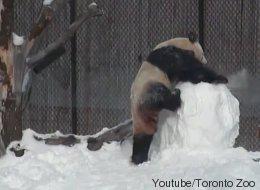 La bataille adorable entre un panda et un bonhomme de neige