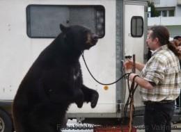 Un ours canadien «exhibé» dans un marché de Noël français fait polémique