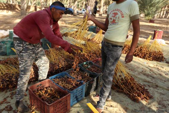 tunisia agriculture
