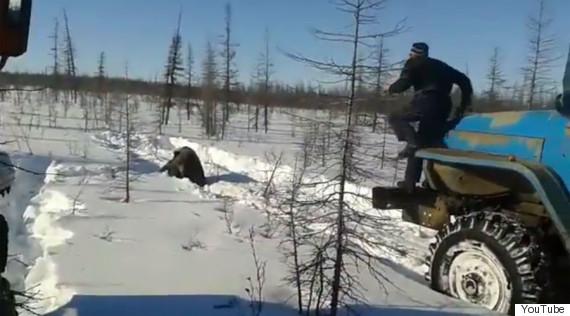 bear youtube