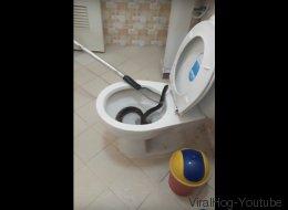 Ils extraient un énorme serpent des toilettes