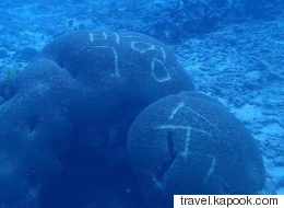 태국 바닷속 산호에서 한글 낙서가 발견됐다(사진)