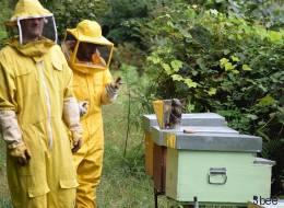 Un team di giovani italiani crea l'alveare hi-tech per salvare la vita alle api