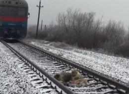كلب يرفض ترك شقيقته المتعبة وسط سكة حديدية لمدة يومين.. شاهِده بين الثلوج وتحت القطارات المسرعة