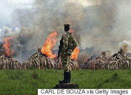 중국, 자국 내 코끼리 상아 거래 전면 금지한다