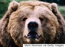 파리동물원에서 코끼리와 곰은 전시하지 않는 이유
